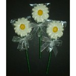 Fancy Daisy White Chocolate Pop